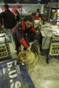 miembro_Bomberos_Unidos_da_beber_perro